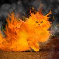 Theflamingkitty