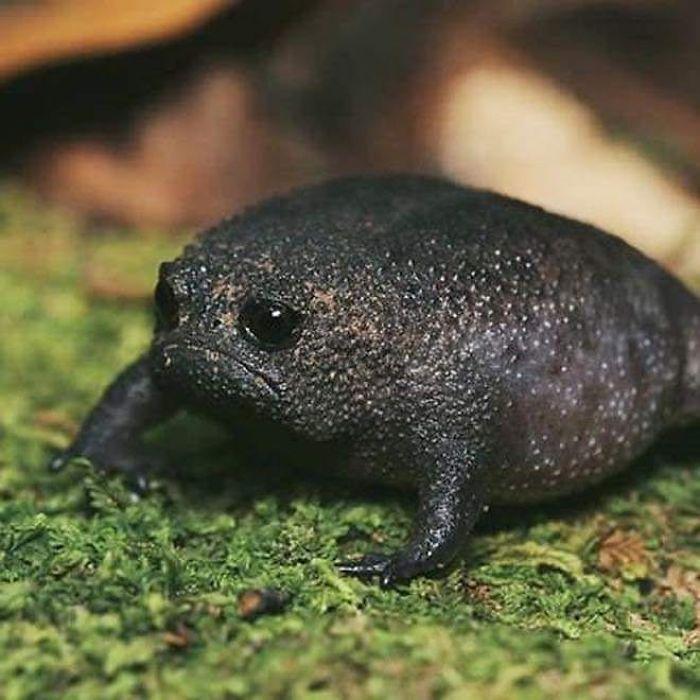 black-rain-frogs-2-5edf2a036a852__700.jpg