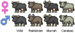 cows 2(water buffalos).png