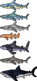 regular shark types.png