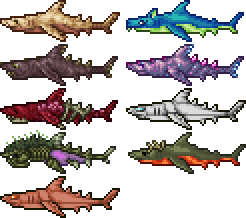 special shark types.png