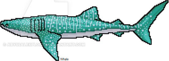 whale shark wip.png